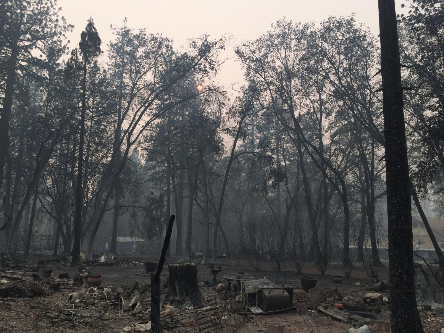 This photo was taken of a neighborhood in Paradise before the residents had returned to their homes.