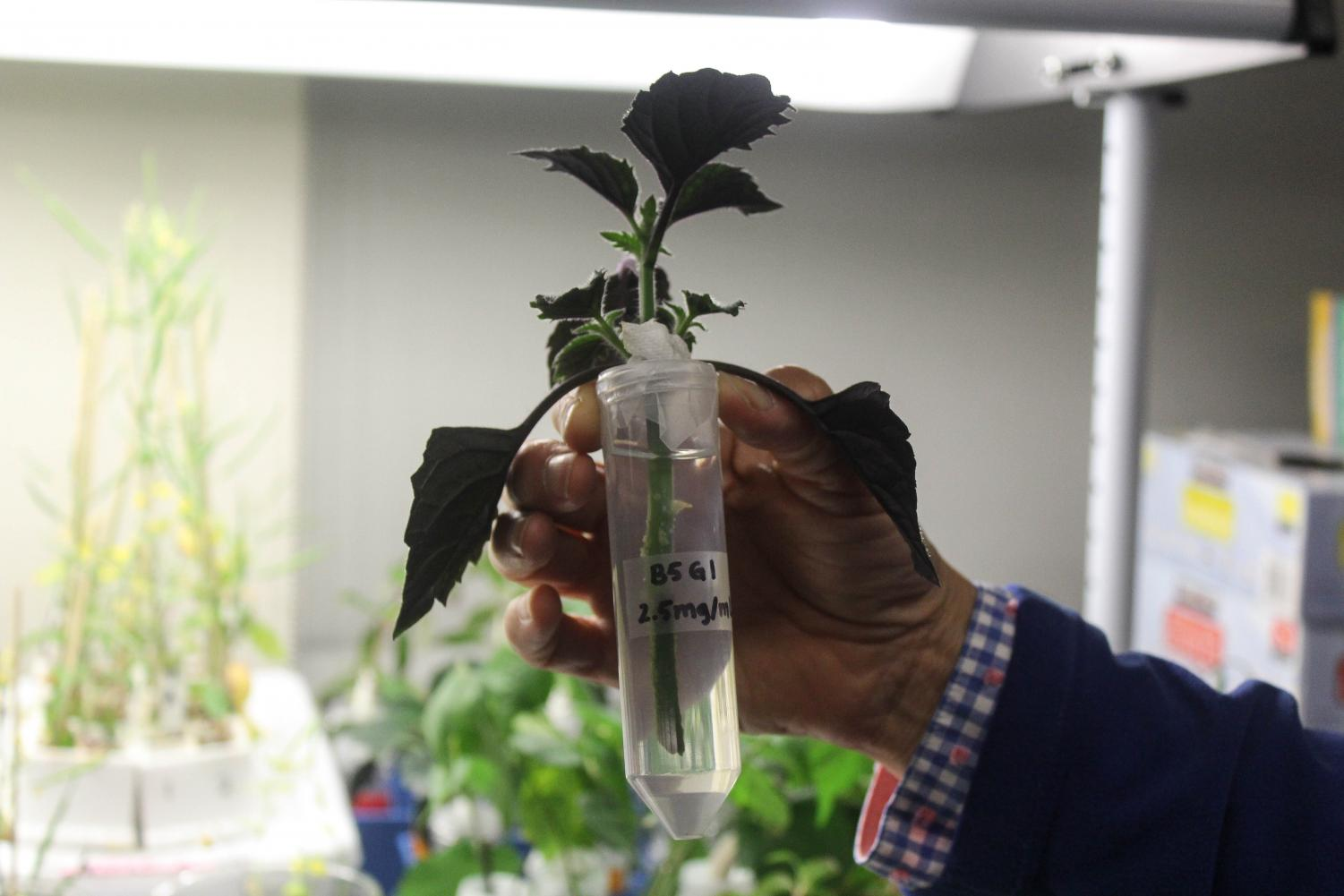 Daley holds a plant that is part of an experiment for bio tech