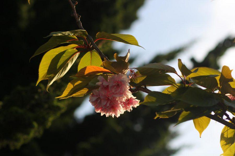 PHOTOS: A silent May